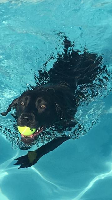 Dog Pool Fun